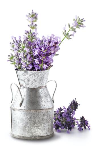Lavander Plants in Medal Tin Vase